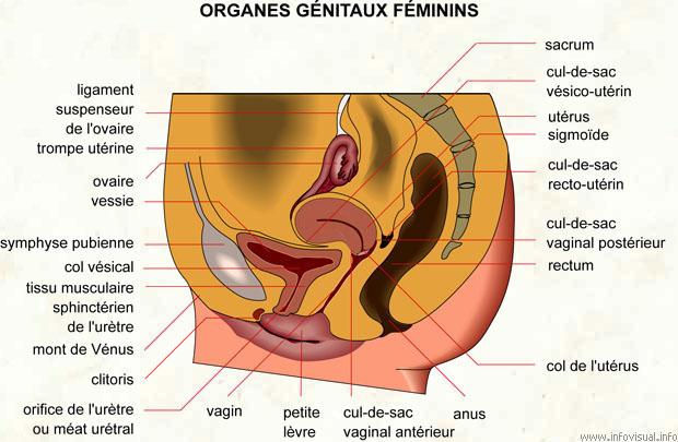 sexe de filles sexy positions sexuelles orgasme feminin