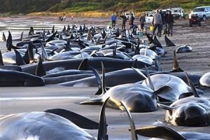 whalesbeachEPA_450x300
